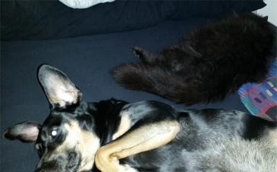 Fuchur und Tyson auf Ralphs Bett