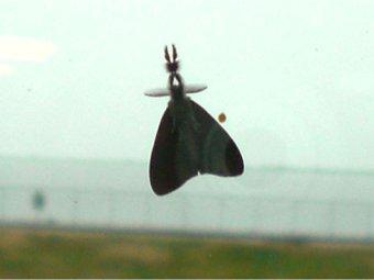 Spannendes Insekt am Fenster in WHV
