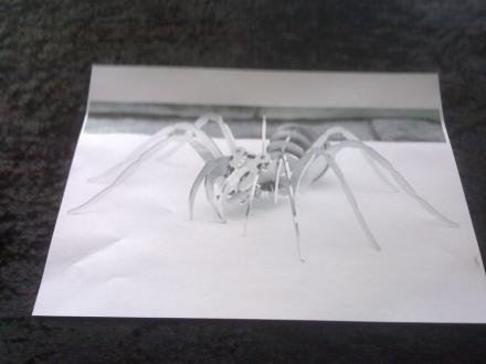 spinnen-vorlage